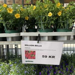Blommor och Växter